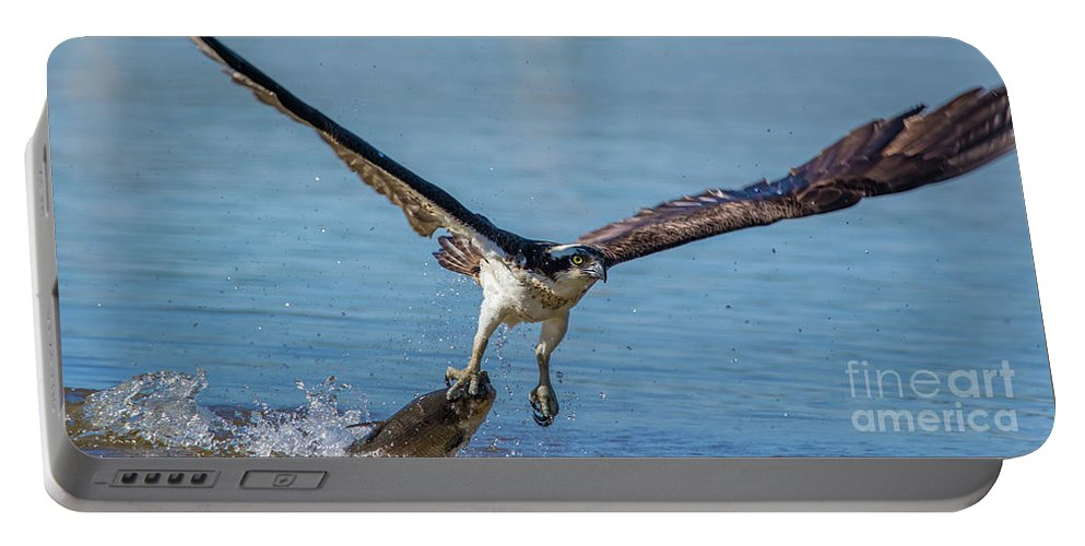 Osprey Portable Battery Charger featuring the photograph Animal - Bird - Osprey Catching A Fish by CJ Park