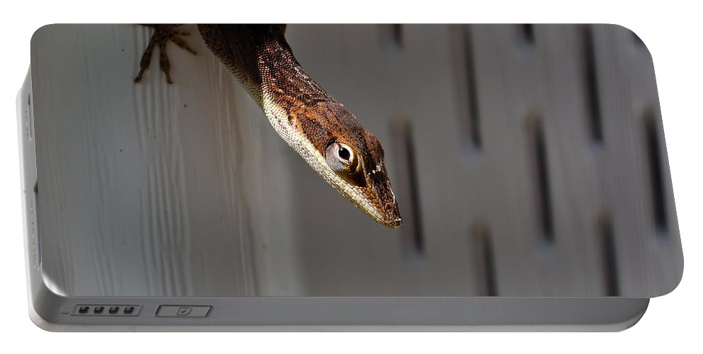 Animal Portable Battery Charger featuring the photograph Anole by Kenneth Albin