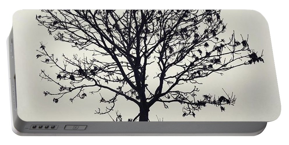Tree Portable Battery Charger featuring the photograph Another Walk Through The by John Edwards