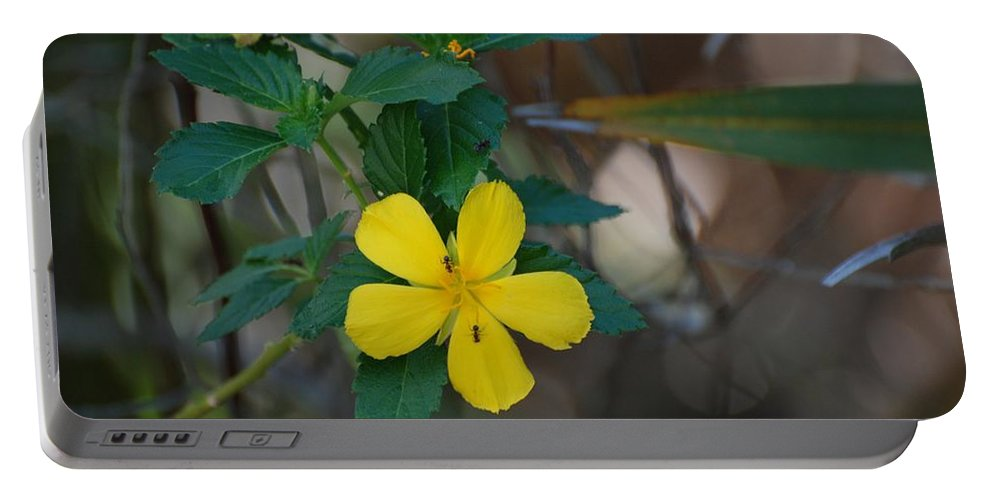 Macro Portable Battery Charger featuring the photograph Ant Flowers by Rob Hans