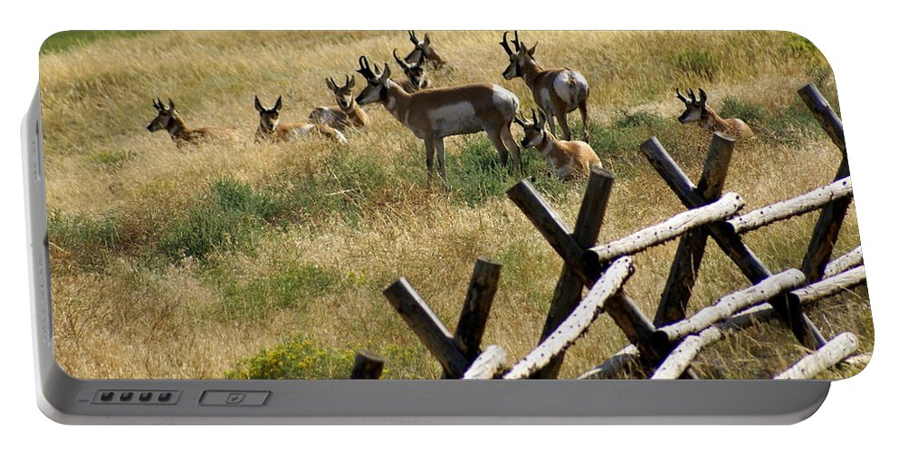 Wildlife Portable Battery Charger featuring the photograph Antelope 2 by Marty Koch