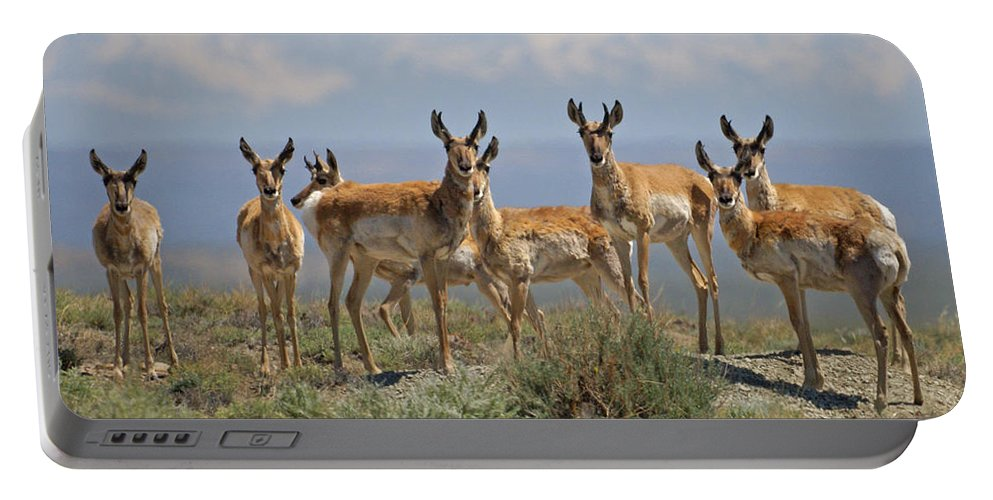 Antelope Portable Battery Charger featuring the photograph Antelope by Heather Coen
