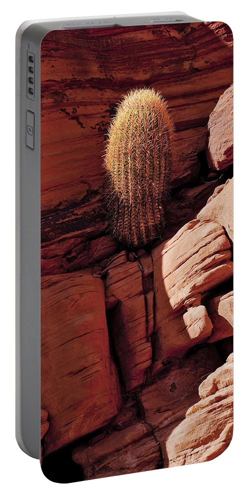Barrel Cactus Portable Battery Charger featuring the photograph Any Crack Will Do by Kelley King