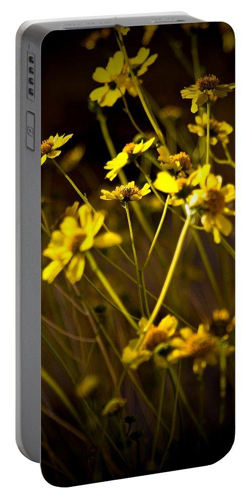 Desert Sunflower Portable Battery Charger featuring the photograph Anza Borrego Desert Sunflower 4 by Chris Brannen