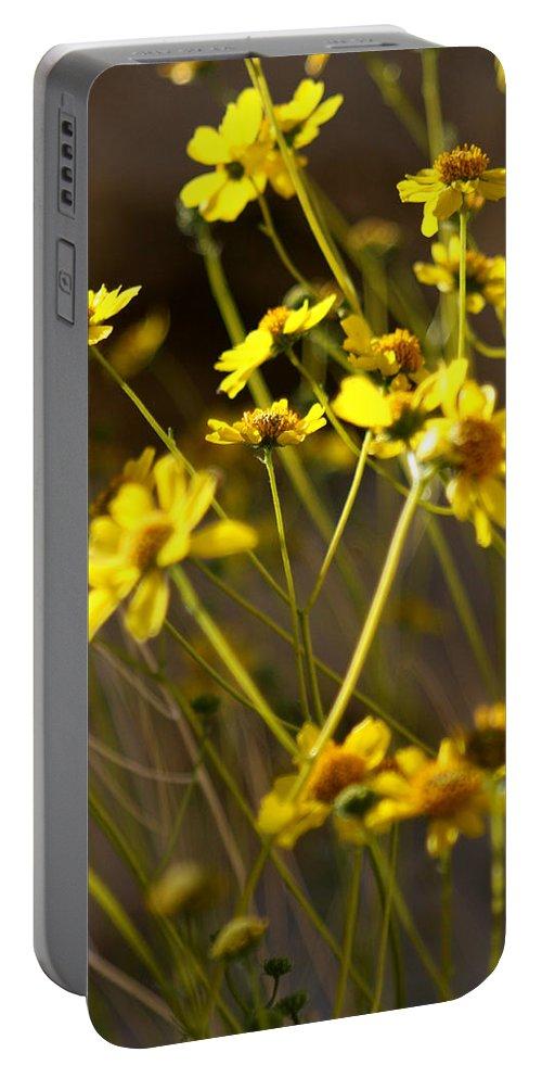 Desert Sunflower Portable Battery Charger featuring the photograph Anza Borrego Desert Sunflowers 1 by Chris Brannen