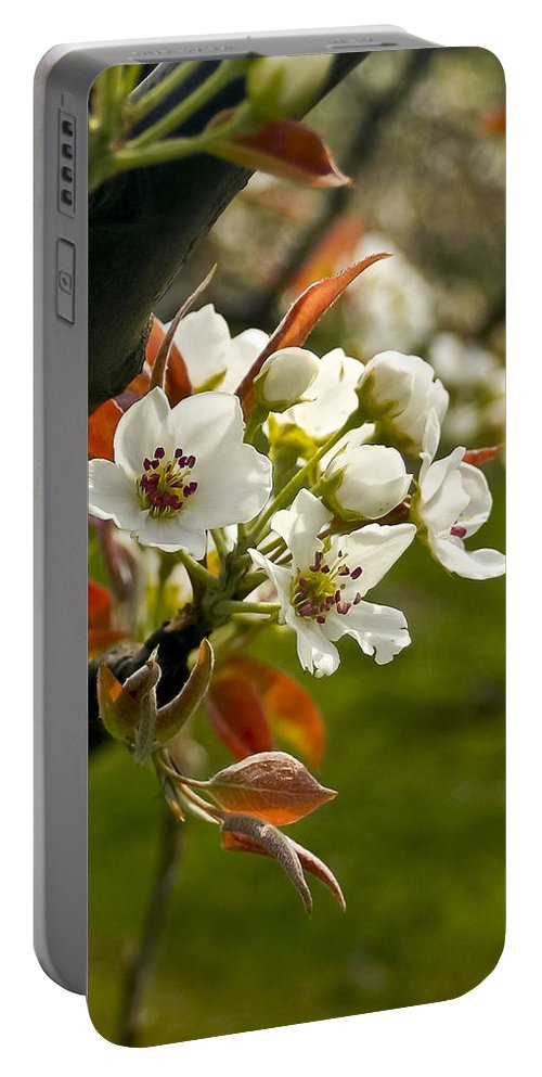Flowers Portable Battery Charger featuring the photograph Apple Blossoms by Albert Seger