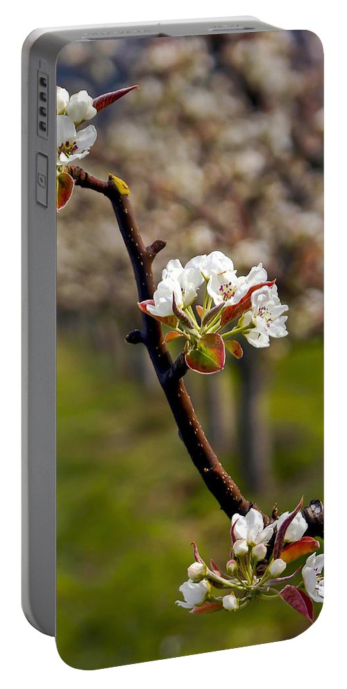 Orchard Portable Battery Charger featuring the photograph Apple Promise by Albert Seger