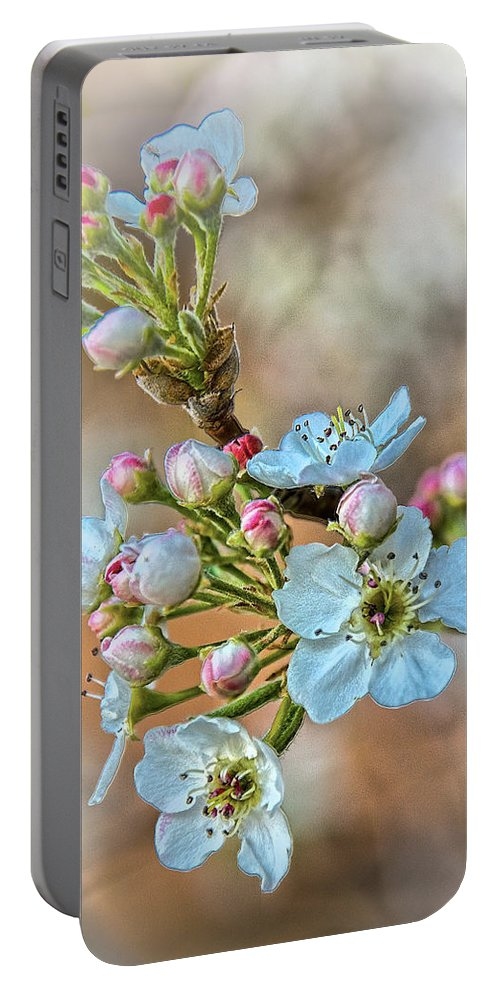 Apple Portable Battery Charger featuring the photograph Apples In The Spring by Charles Muhle