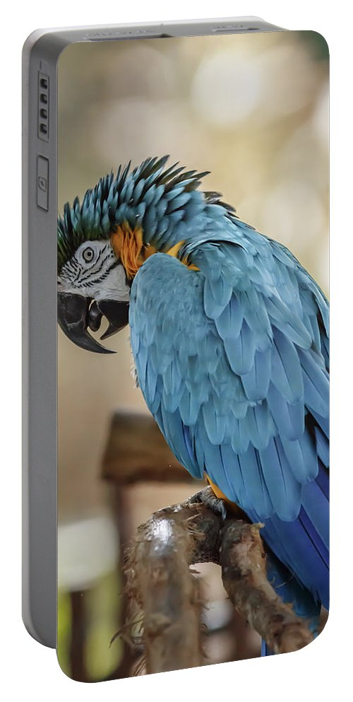 Naples Portable Battery Charger featuring the photograph Ara Parrot by Peter Lakomy