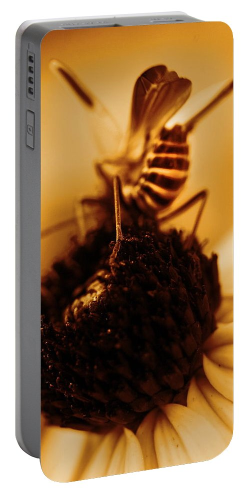 Black Eyed Susans Portable Battery Charger featuring the photograph Arabesque - Gold by Angela Rath