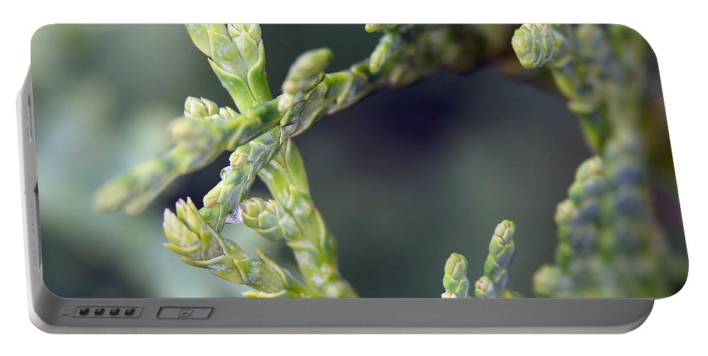 Lauren Radke Portable Battery Charger featuring the photograph Arborvitae by Lauren Radke