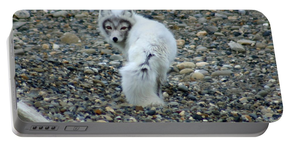 Alaska Portable Battery Charger featuring the photograph Arctic Fox by Anthony Jones