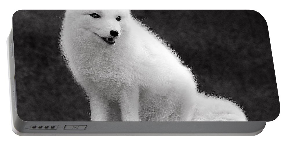 Arctic Portable Battery Charger featuring the photograph Arctic Fox by Michael Peychich