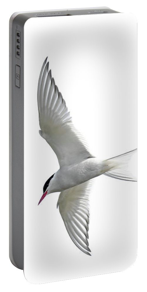 Arctic Tern Portable Battery Charger featuring the photograph Arctic Tern Flying In Mist by Arterra Picture Library