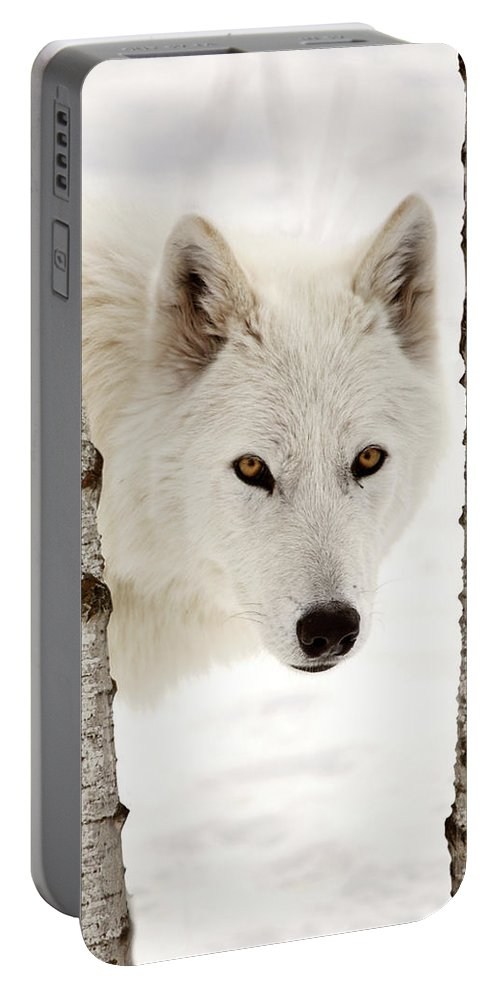 Arctic Wolf Portable Battery Charger featuring the digital art Arctic Wolf Seen Between Two Trees In Winter by Mark Duffy