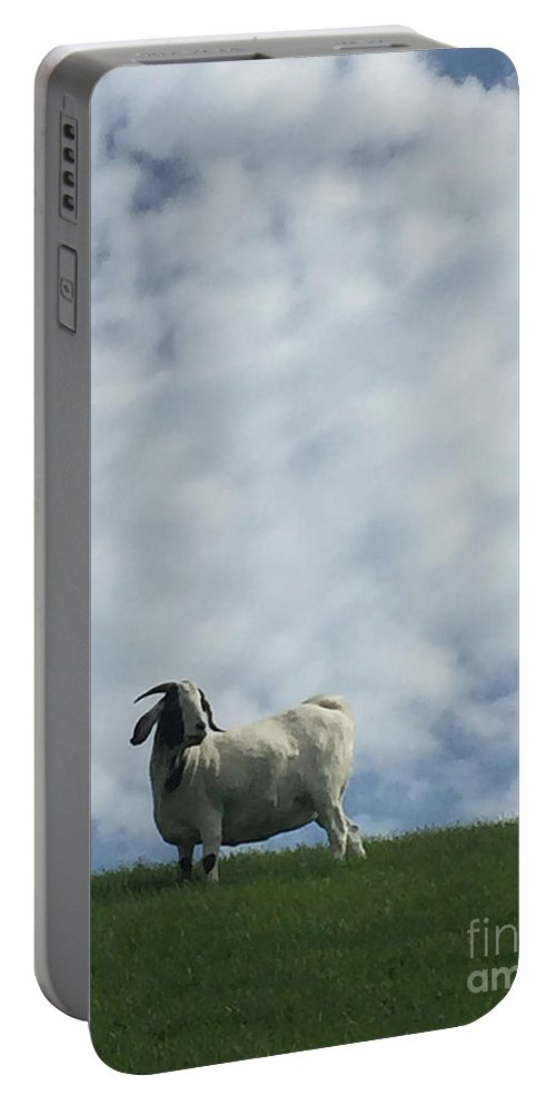 White Portable Battery Charger featuring the photograph Art Goat by Margie Hurwich