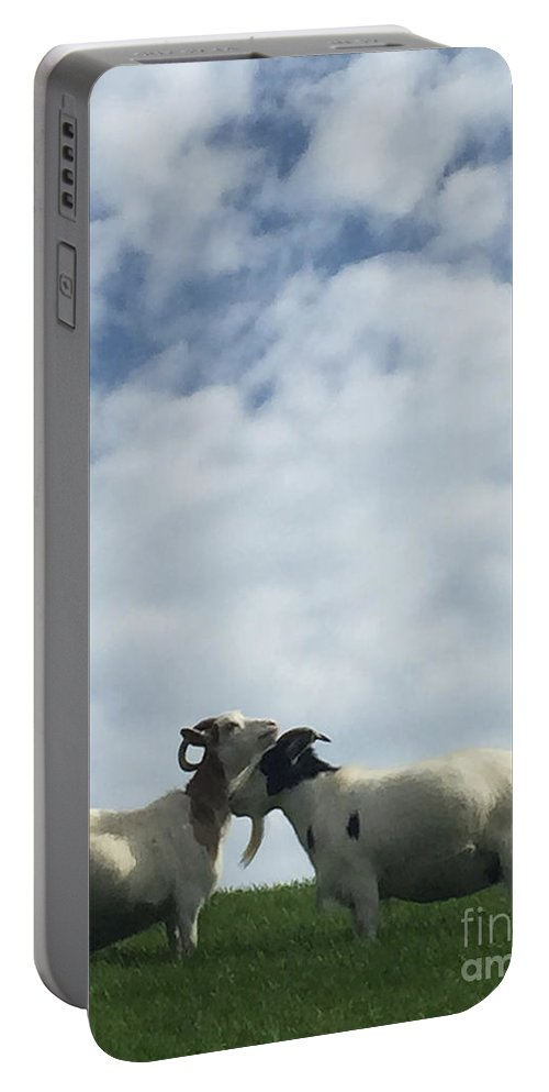 White Portable Battery Charger featuring the photograph Art Goats II by Margie Hurwich