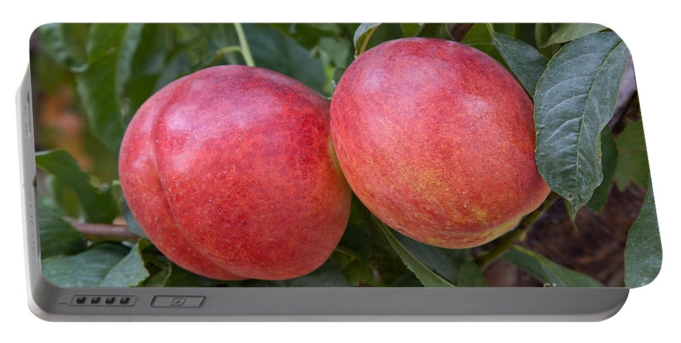 Plant Portable Battery Charger featuring the photograph Artic Summer Nectarines by Inga Spence