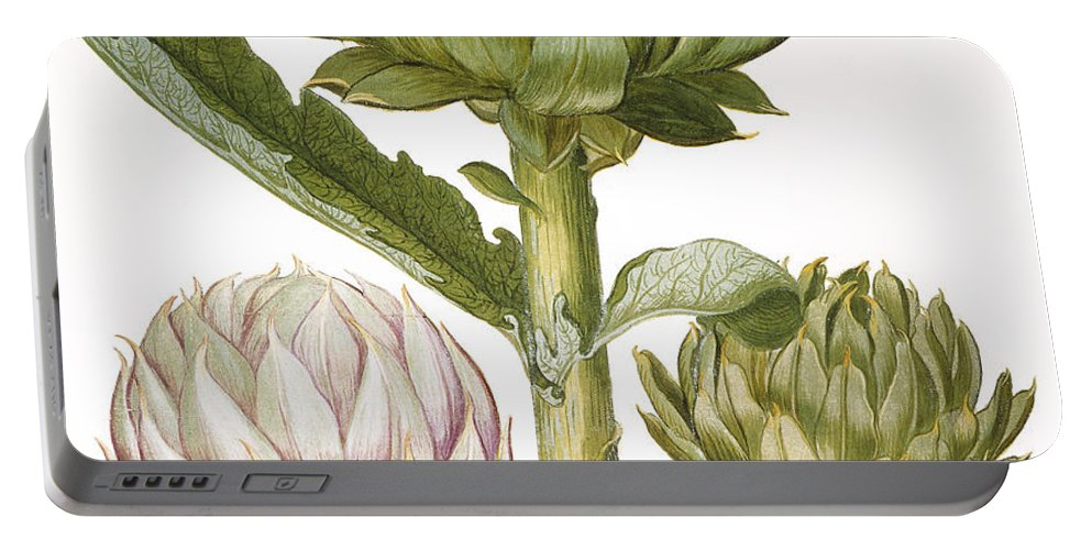 1613 Portable Battery Charger featuring the photograph Artichoke, 1613 by Granger