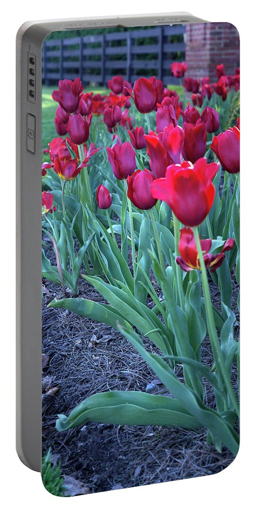 Louisville Portable Battery Charger featuring the photograph Artistic Line Of Roses by FineArtRoyal Joshua Mimbs