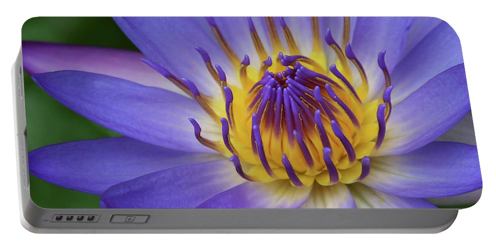 Waterlily Portable Battery Charger featuring the photograph The Lotus Flower by Sharon Mau