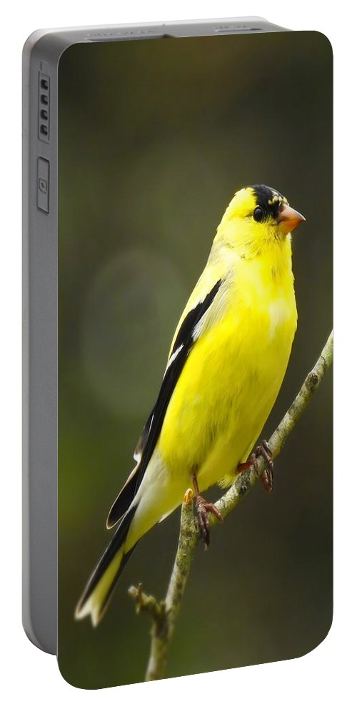 Finch Portable Battery Charger featuring the photograph Yellow Finch Perching by Beth Myer