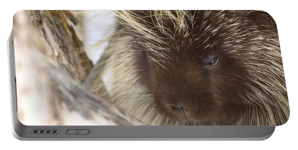 Porcupine Portable Battery Charger featuring the photograph As Soft As A Pincushion by DeeLon Merritt