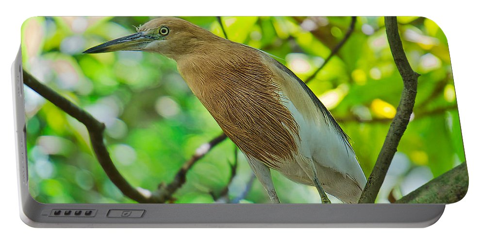 Javan Pond Heron Portable Battery Charger featuring the photograph Asian Heron by Judy Kay