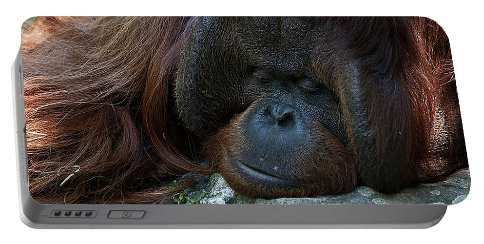 Orang Untang Portable Battery Charger featuring the photograph Asleep by Heiko Koehrer-Wagner