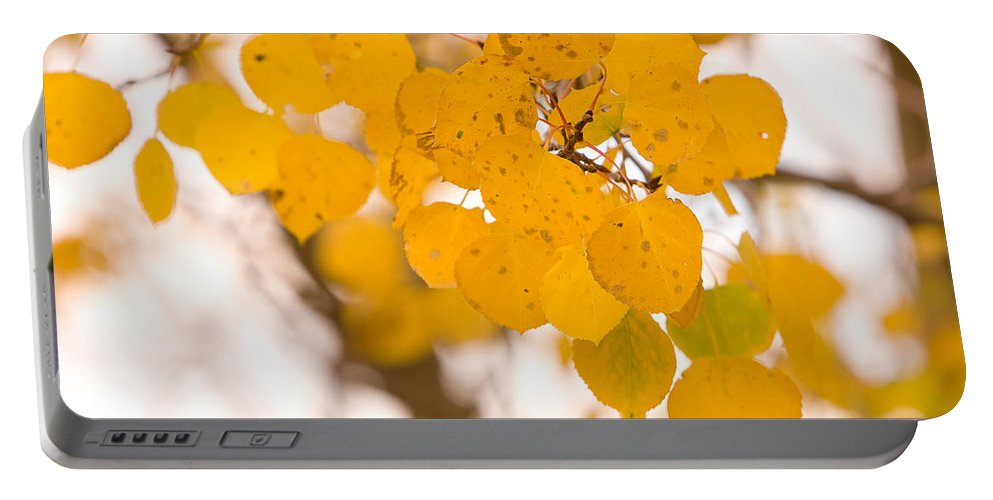 Trees Portable Battery Charger featuring the photograph Aspen Leaves by James BO Insogna