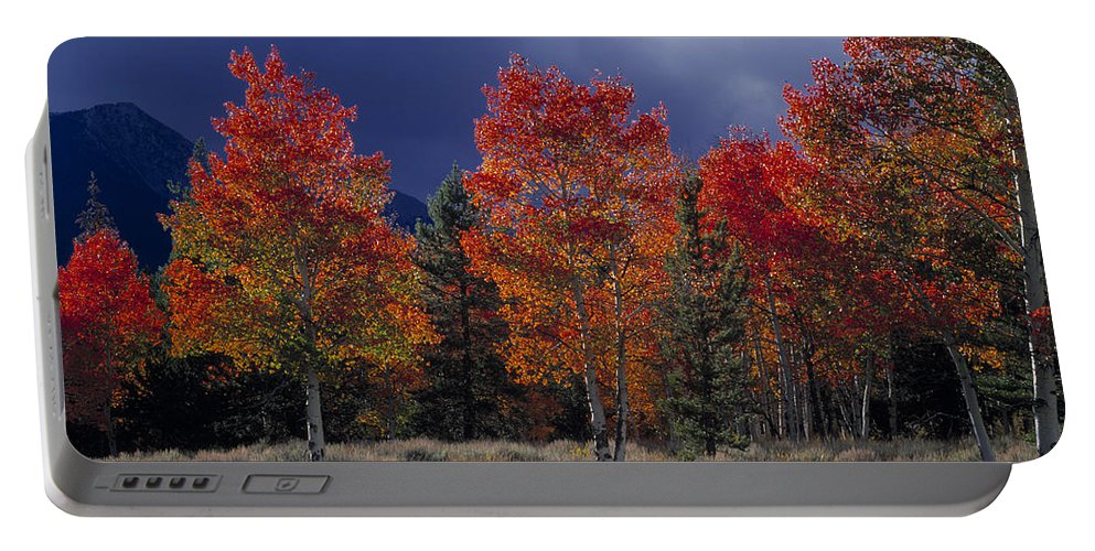 Autumn Portable Battery Charger featuring the photograph Aspen Light by Leland D Howard