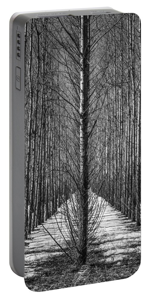 Aspen Portable Battery Charger featuring the photograph Aspen Rows by Paul Freidlund