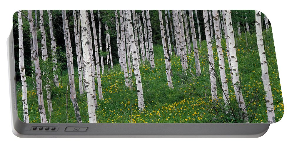 Aspen Portable Battery Charger featuring the photograph Aspens In Spring by Leland D Howard