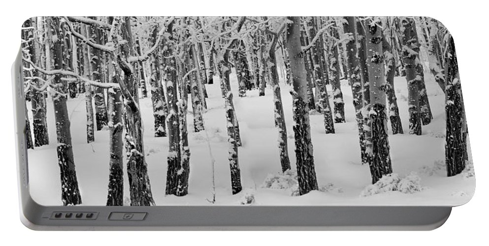 Black And White Portable Battery Charger featuring the photograph Aspens In Winter by Leland D Howard