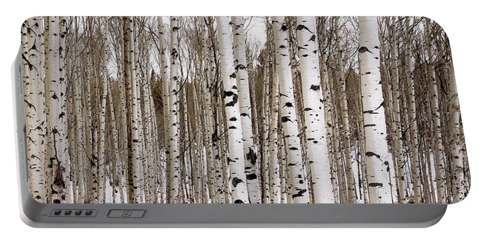 Aspen Portable Battery Charger featuring the photograph Aspens In Winter Panorama - Colorado by Brian Harig