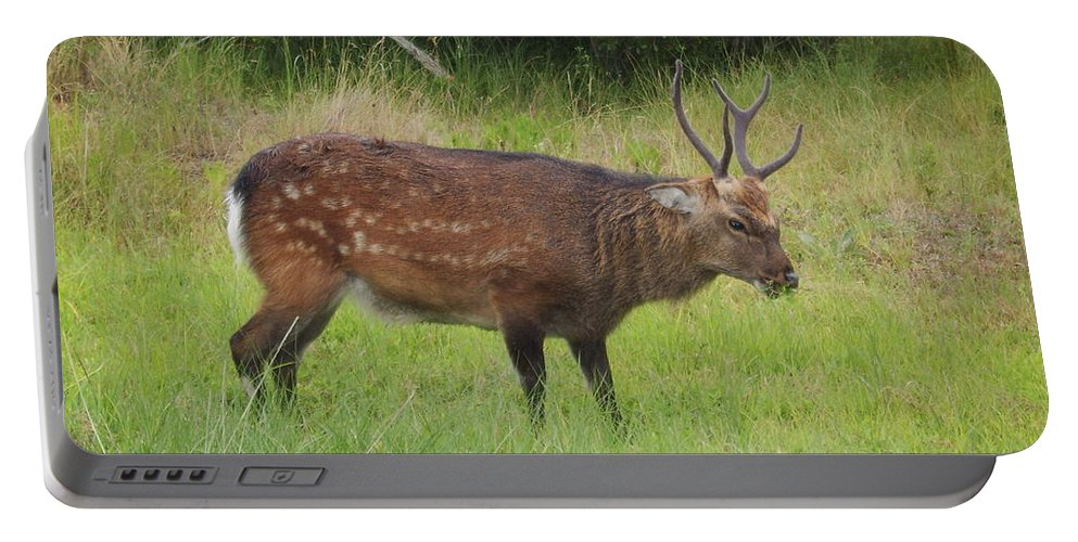 Assateague Island Sitka Deer Images Sitka Deer Prints Assateague Island Prints Assateague Island Wildlife Introduced Species Portable Battery Charger featuring the photograph Assateague Sitka Deer by Joshua Bales