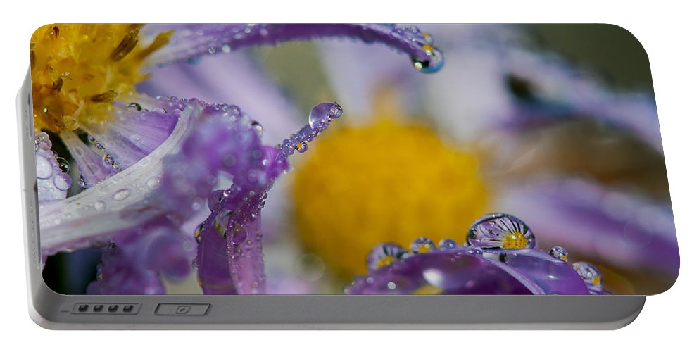 Dew Portable Battery Charger featuring the photograph Aster And Dew by Robert Potts