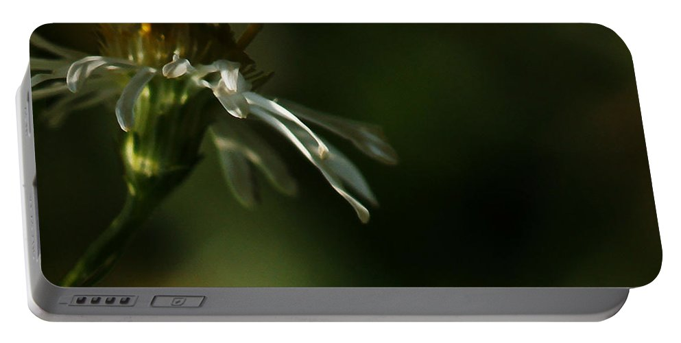 Flower Portable Battery Charger featuring the photograph Aster's Peripheral Ray by Linda Shafer