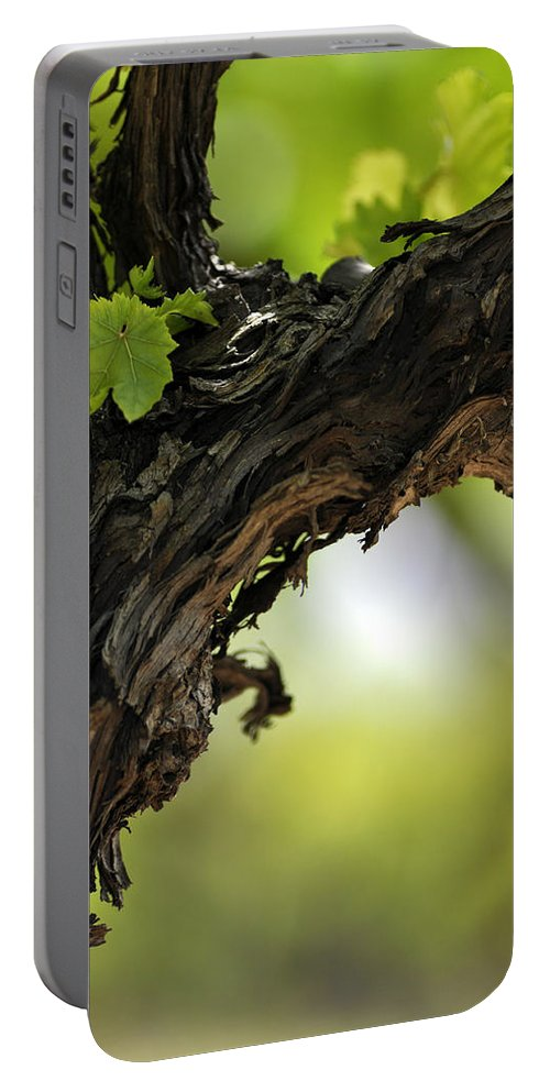 At Lachish Vineyard Portable Battery Charger featuring the photograph At Lachish Vineyard by Dubi Roman