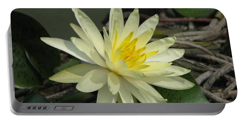 Lilly Portable Battery Charger featuring the photograph At The Pond by Amanda Barcon