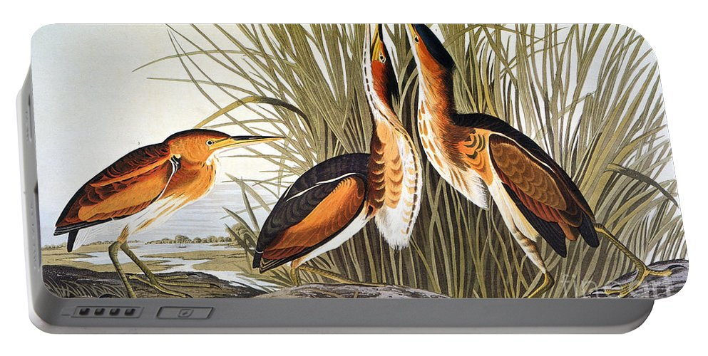 1838 Portable Battery Charger featuring the photograph Audubon: Bittern by Granger