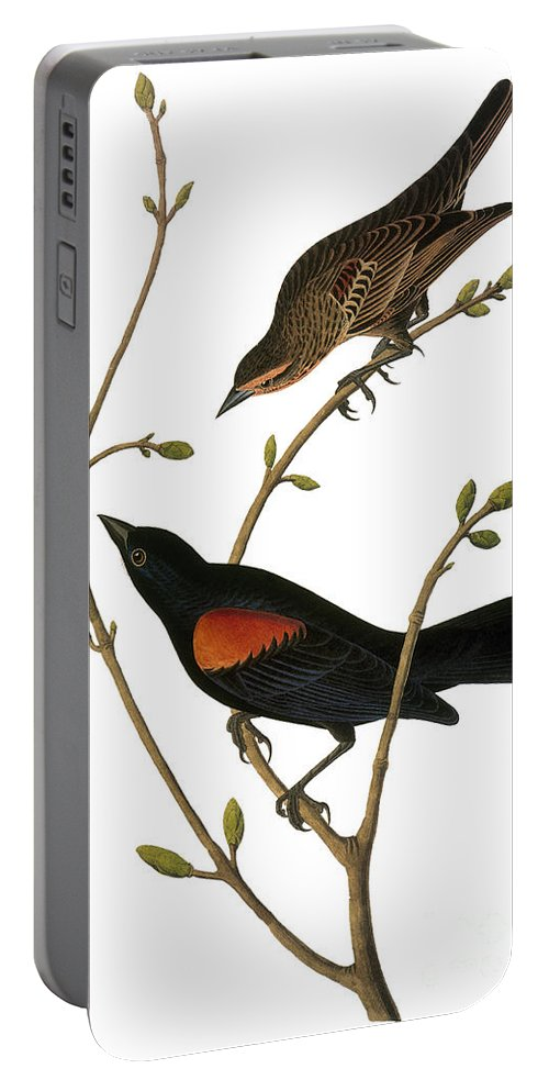 1838 Portable Battery Charger featuring the photograph Audubon: Blackbird by Granger