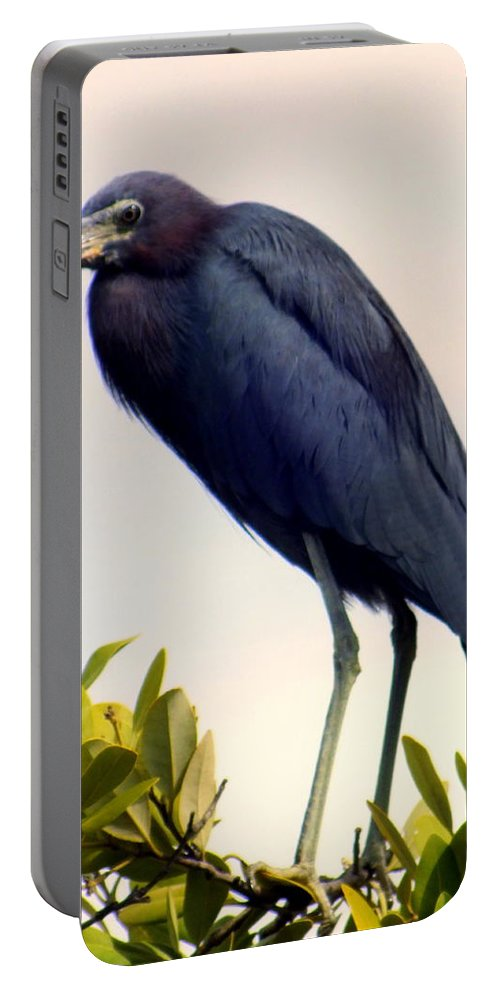Birds Portable Battery Charger featuring the photograph Audubon Blue by Karen Wiles