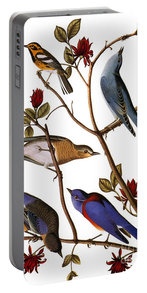 1838 Portable Battery Charger featuring the photograph Audubon: Bluebirds by Granger