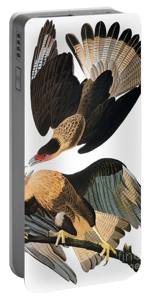 1827 Portable Battery Charger featuring the photograph Audubon: Caracara, 1827-38 by Granger