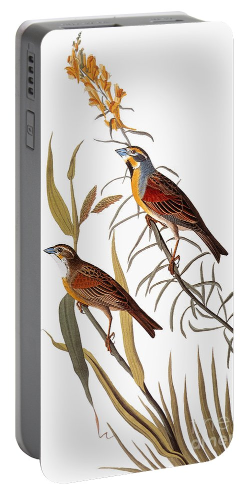 1838 Portable Battery Charger featuring the photograph Audubon: Dickcissel by Granger