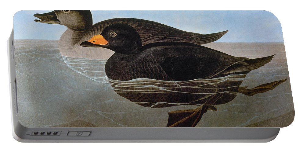 1827 Portable Battery Charger featuring the photograph Audubon: Duck, 1827 by Granger