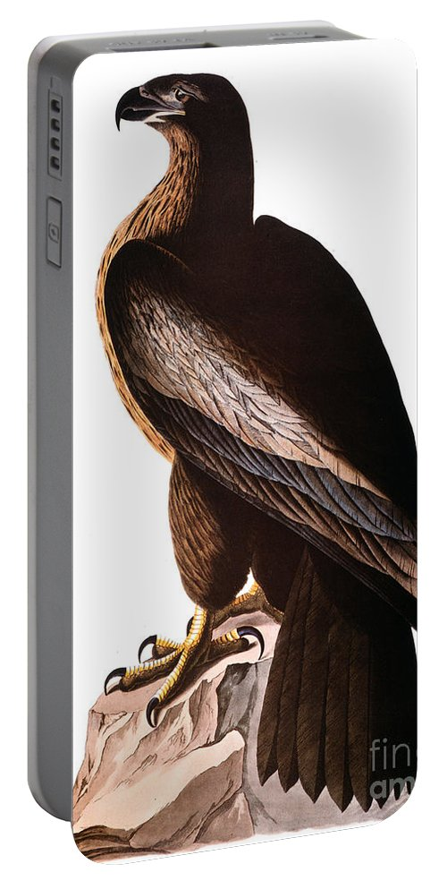 1838 Portable Battery Charger featuring the photograph Audubon: Eagle by Granger