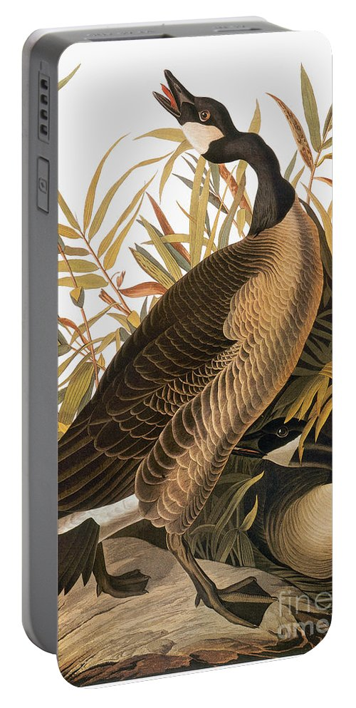 1838 Portable Battery Charger featuring the photograph Audubon: Goose by Granger