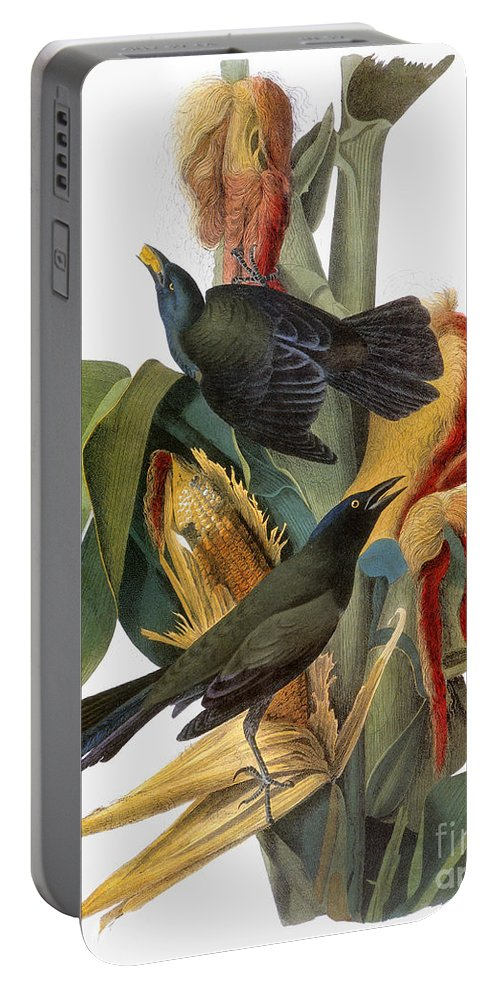 1838 Portable Battery Charger featuring the photograph Audubon: Grackle by Granger
